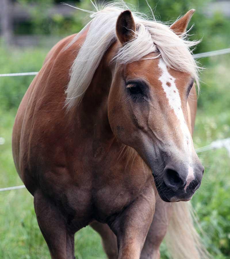 Sanctuary Horse - Albert