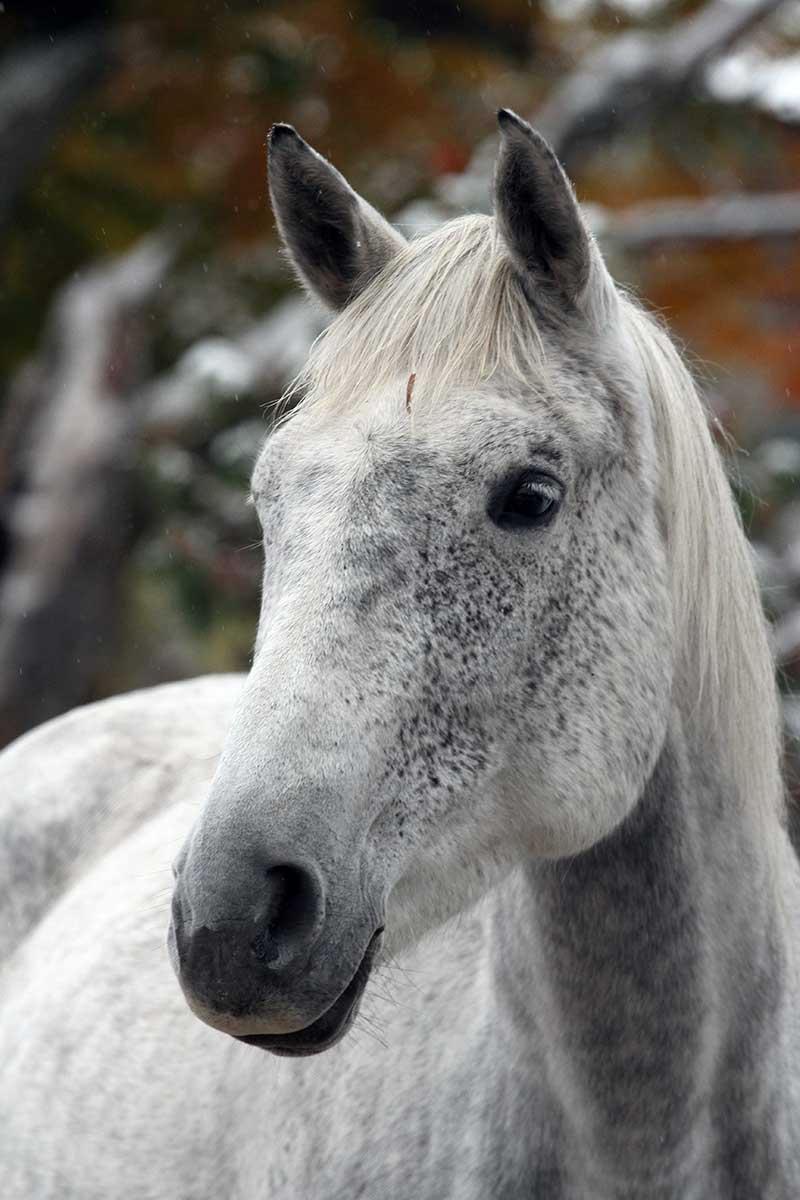 Sanctuary Horse - Tory