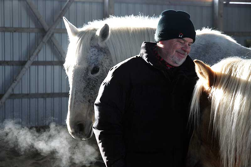 Energy Healing with the Horses