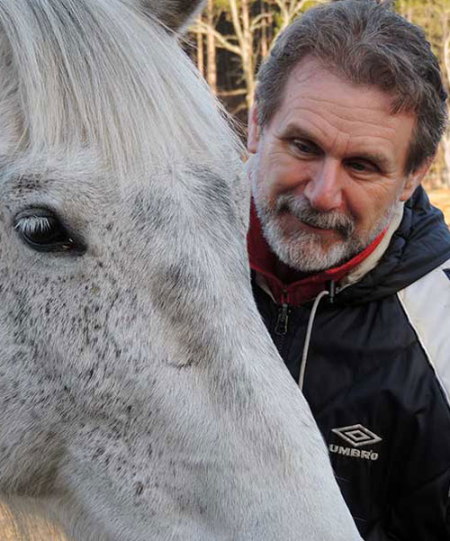 Horse Energy Healing Services