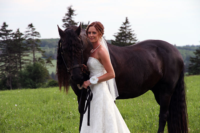 Pose with Horses for Your Wedding Photos