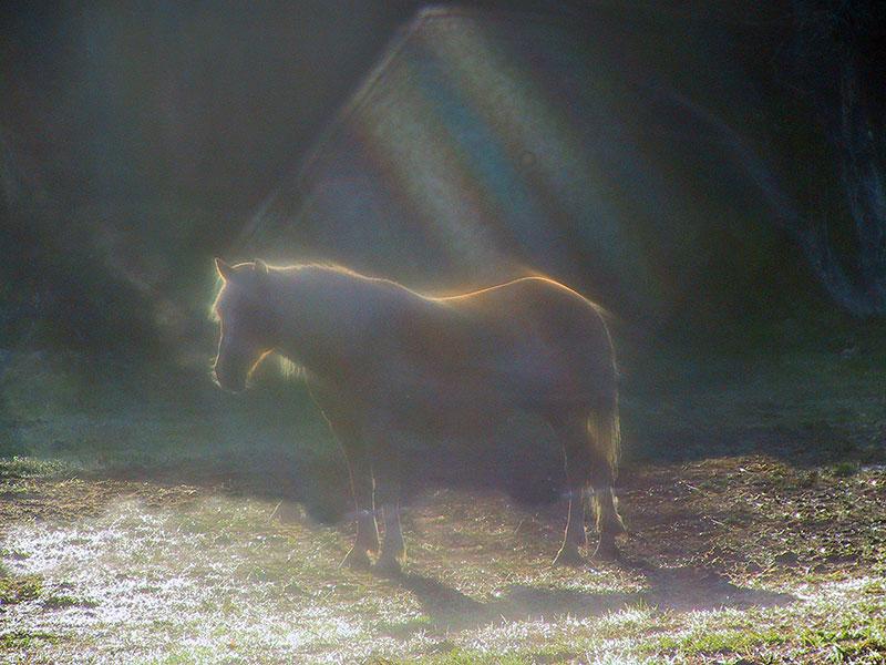 The Horses at Hawks Landing Horse Sanctuary