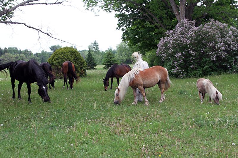 The Horses at Hawks Landing