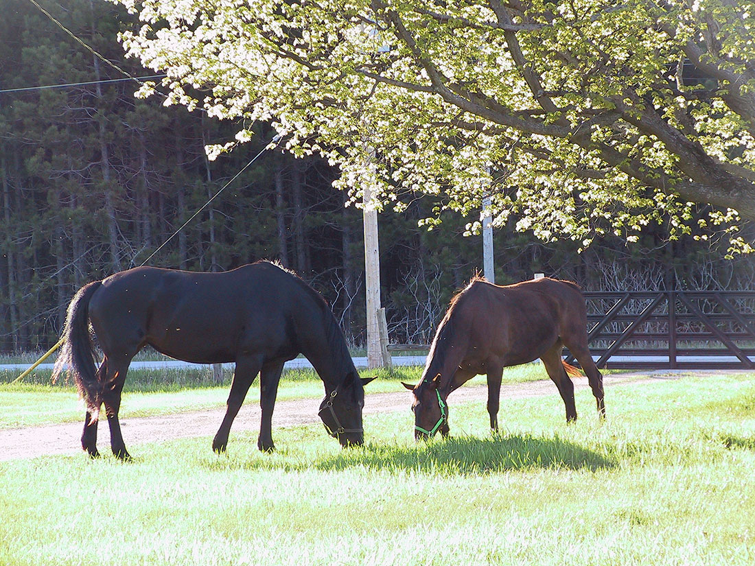 Horse Farm Vacation Rentals & Retreats