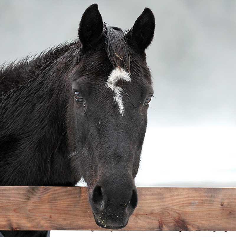 Sanctuary Horse - Lady