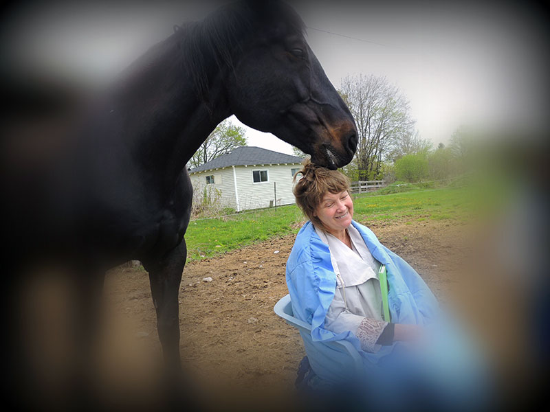 Meditating with horses designed is to promote relaxation