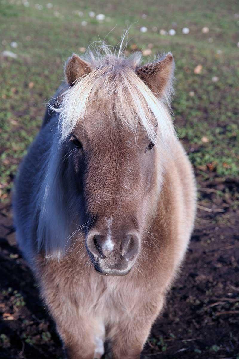 Sanctuary Horse - Nellie