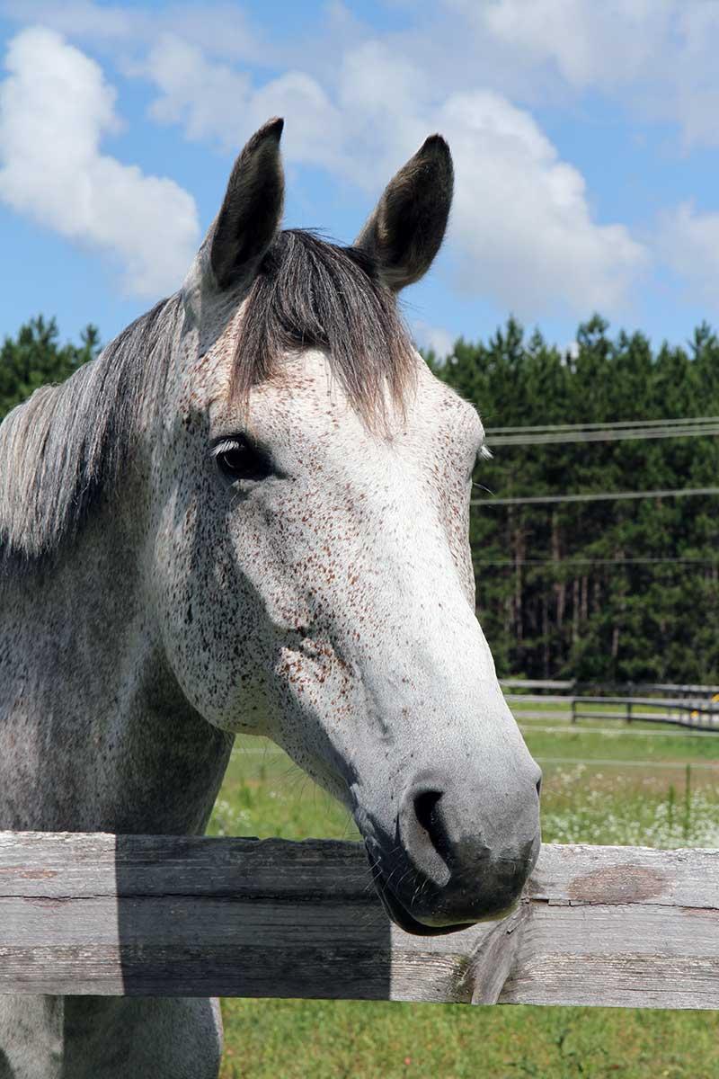 Sanctuary Horse - Joules
