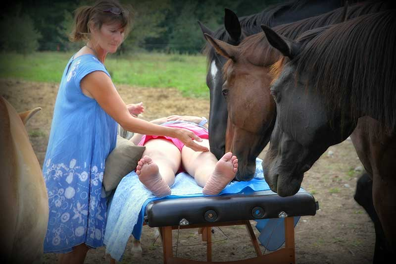 Reiki Healing with Horses | Simcoe County